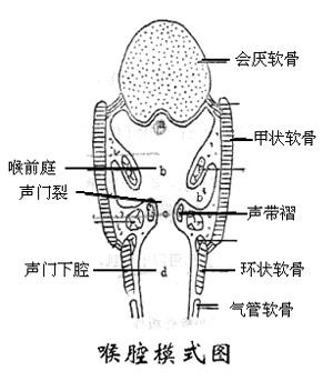 课程讲解-动物解剖与组织胚胎学