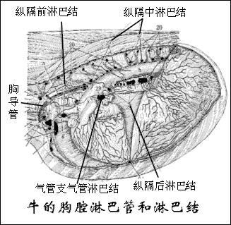 课程讲解 动物解剖与组织胚胎学